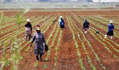 The South African economy is out of recession as agriculture, finance and mining lift gross domestic product (GDP).